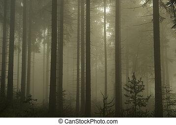 12, nebel, wald