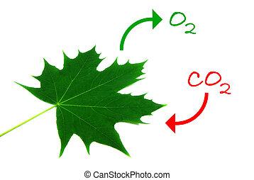 2, photosynthese