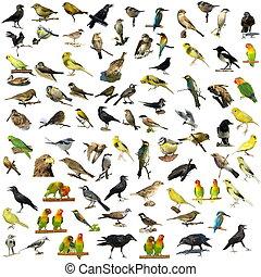 81 Fotos isolierter Vögel