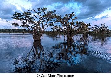 Amazonischer Regenwald. Laguna grande, Nationalpark cuyabeno. Ecuador