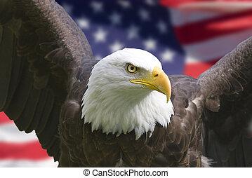 Amerikanischer Adler mit Flagge