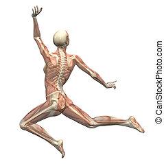Anatomie in Bewegung - Frauen springen