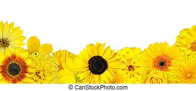auswahl, boden, freigestellt, gelbe blüten, reihe