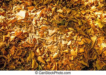 Autumnal bemalte Blätter in warmer, sonniger Farbe auf einer Bank.