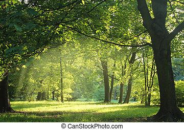 Bäume in einem Sommerwald