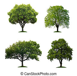Bäume isoliert