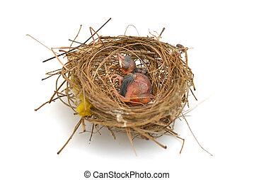 Babyvogel in einem Nest.