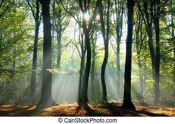balken, durch, bäume, gießen, licht