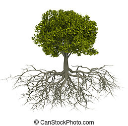 Baum und Wurzel