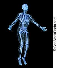 begriff, skelett, joga, 3d, abbildung, andere, model., mann, masche