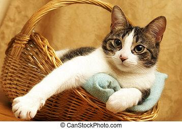 Bequeme Katze im Korb.