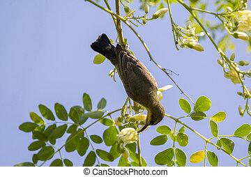 Bild eines Vogels (Olive-backed sunbird, Yellow-bellied sunbird). Wilde Tiere.