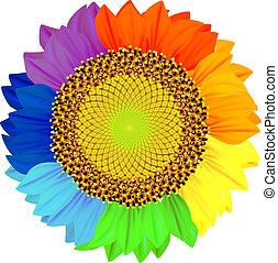 blütenblätter , verschieden, rainbow., farben, sonnenblume