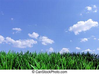 blauer himmel, gras, grün