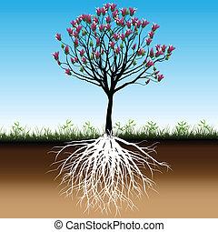 Blossom Baum.