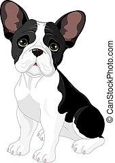 bulldogge, franzoesisch