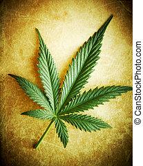 Cannabisblätter auf Grunge-Hintergrund, flaches DOF.