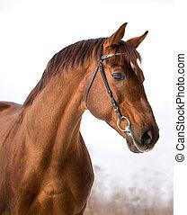 Chestnut-Pferd im Winter.