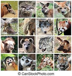 collage, säugetiere, tier
