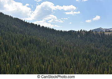 Cottonwood Canyon Drive in Utah.