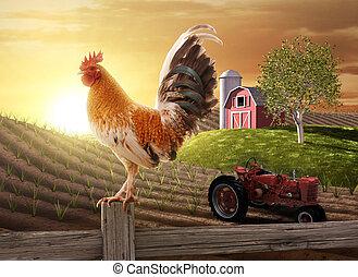 Country Farm Morning