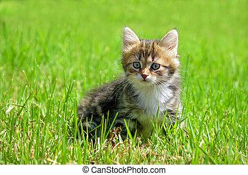 Das flauschige Kätzchen spielt in einem grünen Gras.