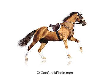 Das galoppierende Pferd isoliert
