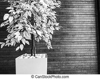 Dekorative Innenblüte steht auf dem Boden im Zimmer.