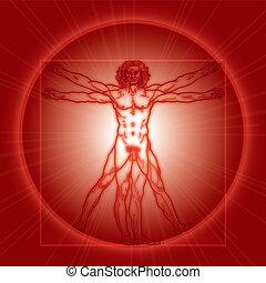 Der vitrukanische Mann (Homo vitruviano). Rote Version.