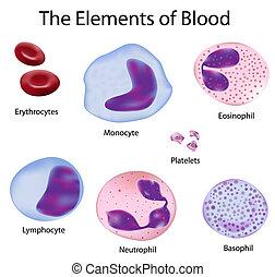 Die Blutzellen