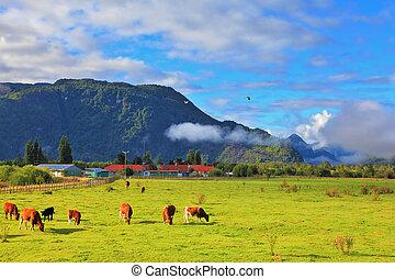 Die Idylle in chileanischen Patagonien
