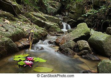 Die kleine Wasserlilie und der Wasserfall im Wald,
