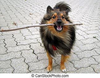 doggy, stock