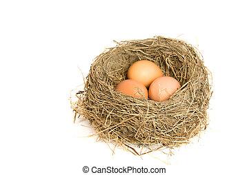 Drei Eier in einem Nest