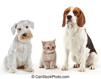 Drei Haustiere, Katze und Hund