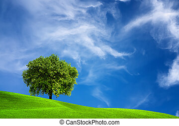 Eichenbaum in der Natur