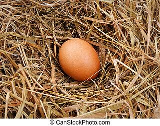 Eier im Nest.