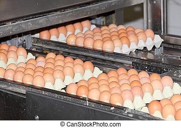 Eier in der Fabrik