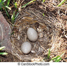 Eier in einem Nest