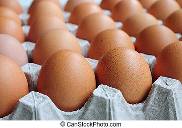 Eier in Karton.