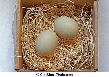 eier, nest, zwei