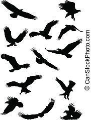 Ein Adlervogel