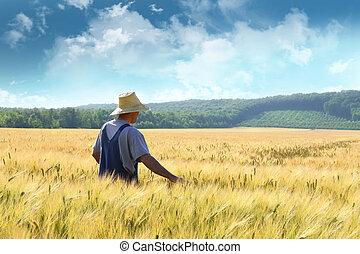 Ein Farmer geht durch ein Weizenfeld