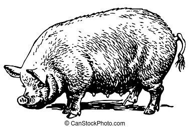 Ein großes Schwein