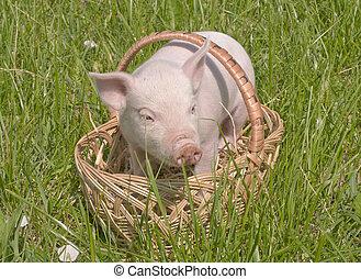 Ein kleines Schwein