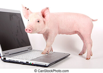 Ein kleines Schwein und ein Laptop