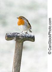 Ein Robin saß auf einem Gabelstiel im Schnee