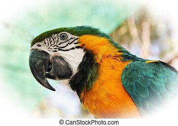 Ein spannendes Nahaufnahmebild von bunten Macaw-Kopf.