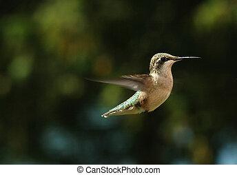 Ein summender Vogel