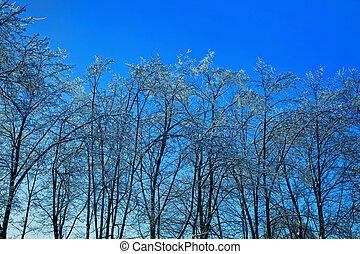 eis, himmelsgewölbe, gegen, bäume